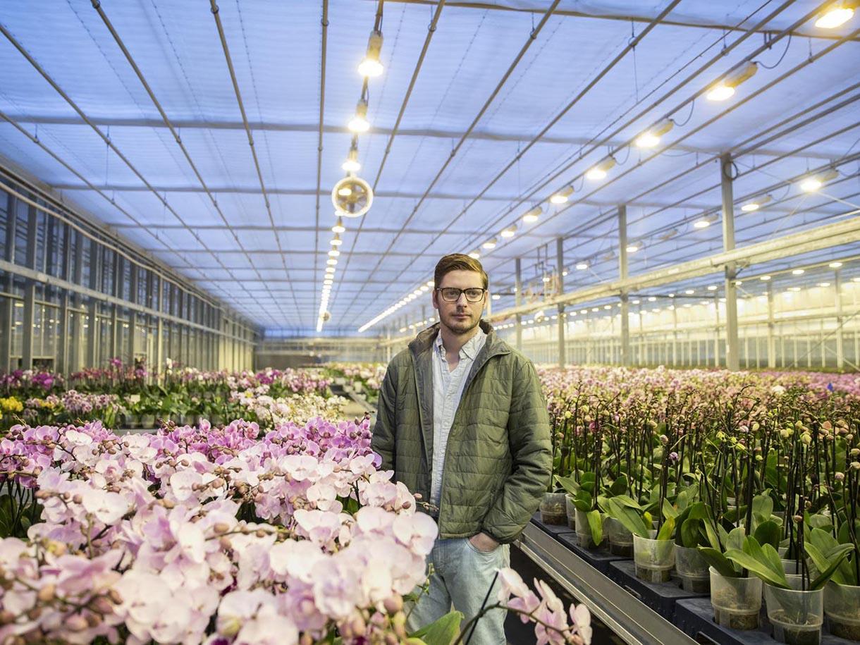 Phương pháp trồng hoa phong lan trong nhà kính hiệu quả cao 5