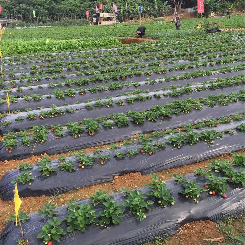 lợi ích khi sử dụng màng PE nông nghiệp