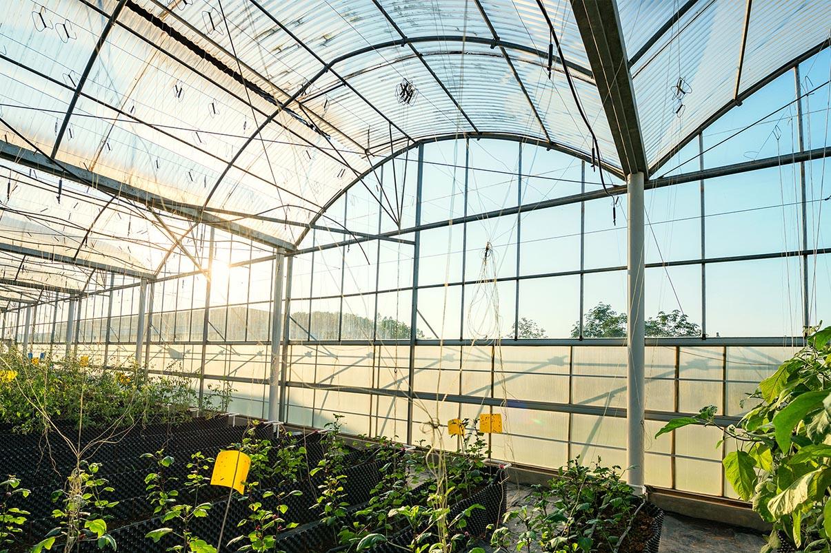 tấm lợp lấy sáng làm nhà kính nông nghiệp