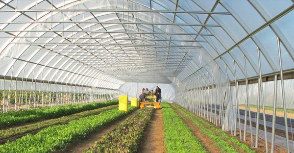 Màng nhà kính là gì? vì sao cần sử dụng nhà kính trong nông nghiệp?