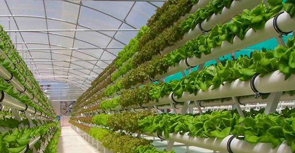 [2O18] Khám phá bảng giá màng lợp nhà kính trồng rau #1 tại Việt Nam