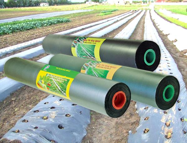 Màng phủ nông nghiệp PE đen cuộn 14MIC 1m x 400m
