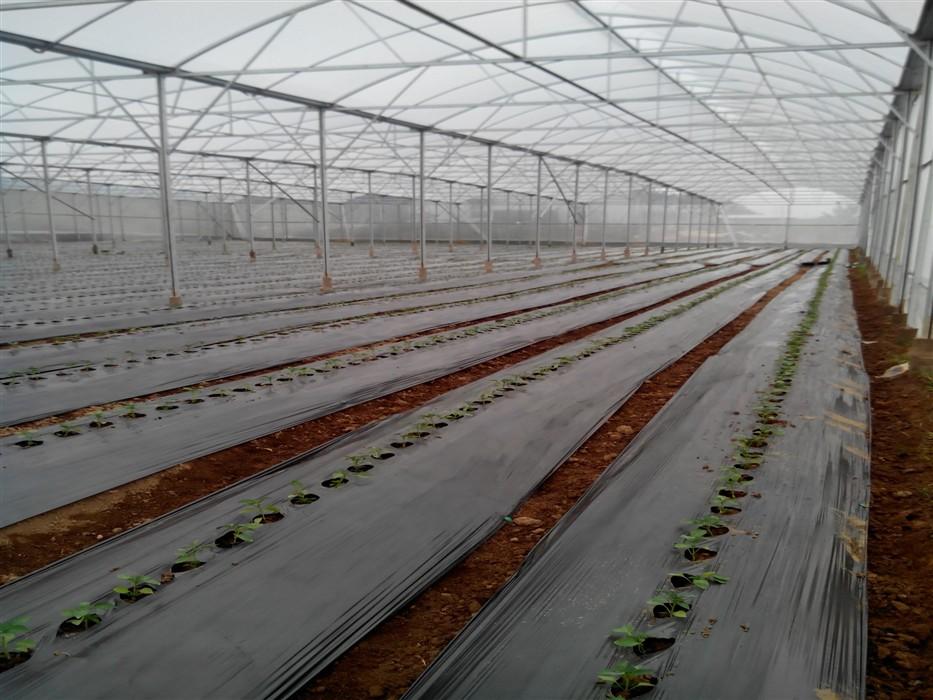 màng nilon nông nghiệp 24mic